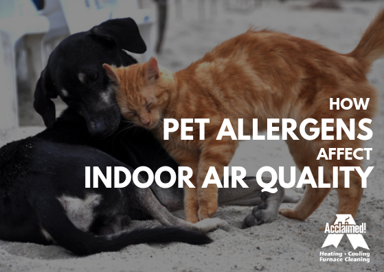 how pet allergens affect indoor air quality